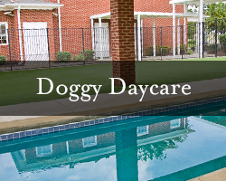 thumb-doggy-daycare